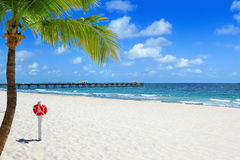 Beach with Palm Tree Stock Image
