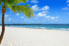 Beach with palm tree royalty free stock image