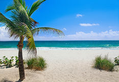 Beach with palm tree royalty free stock photo