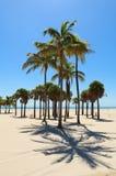 Beach Palm Trees Royalty Free Stock Image