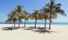 Beach Palm Trees Stock Images