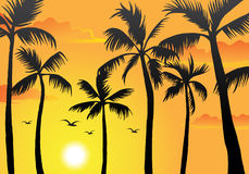 Beach Palm Trees Stock Photo