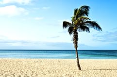 Beach with palm trees Stock Image