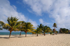 Beach and palm trees. Beach with the palm trees  in Belize, Placencia Stock Image