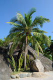 Beach  with palm trees Royalty Free Stock Photography