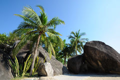 Beach  with palm trees. In Sanya,Hainan,China Royalty Free Stock Image