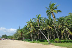 Beach  with palm trees. In Sanya,Hainan,China Royalty Free Stock Photos