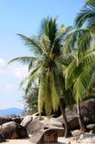 Beach  with palm trees. In Sanya,Hainan,China Stock Photography