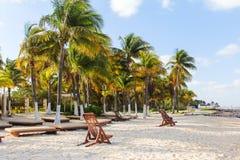 Beach Palm Trees. On Isla Mujeres, Mexico Stock Photography