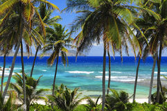 Beach Palm Trees. Ocean View, Blue skies Stock Images