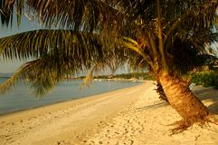 Beach with palm trees. In Thailand Royalty Free Stock Photo