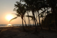 Beach and palm trees. Sunset in Ngapali beach Myanmar Royalty Free Stock Image
