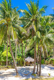 Beach with palm trees and beach beds, summer vacations. Tropical beach with palm trees and beach beds, summer vacations Royalty Free Stock Photos