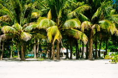Beach, palm trees and beautiful white sand beach in tropical island.  Royalty Free Stock Photography