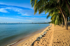 Beach With Palm Trees Royalty Free Stock Images