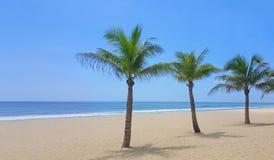 Beach with palm trees and blue sky stock photos