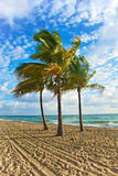 Beach Palm Trees and Blue Sky Stock Photography