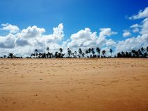 Beach with palm trees and blue sky. The beach with palm trees in the distance against a background of blue sky and clouds. Photo was taken in a village Imbassai Stock Photos