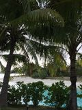 Beach with palm trees. At Bora Bora St regis Royalty Free Stock Photos