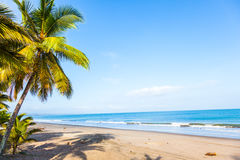 Beach with palm trees. And calm sea in sunny day Royalty Free Stock Images