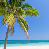 Beach with palm trees, caribbean sea Royalty Free Stock Photos