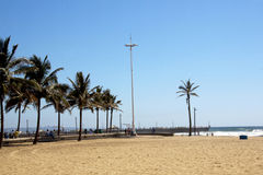 Beach and Palm trees in Durban South Africa Royalty Free Stock Photo