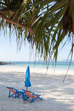 Beach with palm trees and folded umbrella Royalty Free Stock Image