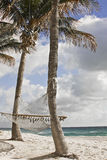 Beach Palm trees and hammocks. A summer scene from Miami Beach with palm trees and hanging hammock Stock Photo