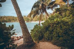 Beach with palm trees of Indian Ocean and forest around. Tropical landscape of South Asia.  Royalty Free Stock Photo