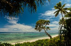 Beach with palm trees on the south pacific island of Tonga stock image