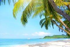 Beach with palm trees. Klong Prao Beach Stock Photo
