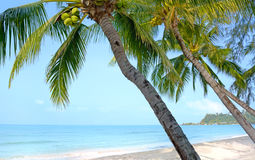 Beach with palm trees Stock Images