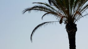Beach with palm trees, at mediterranean sea stock video