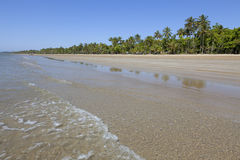 Beach with palm trees in Mission Beach. Queensland,Australia Royalty Free Stock Image
