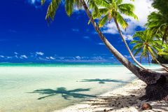 Beach with palm trees over tropical water at Rarotonga, Cook Isl Royalty Free Stock Image