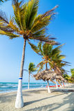 Beach and Palm Trees. Row of palm trees on a beach in Covenas, Colombia Royalty Free Stock Image
