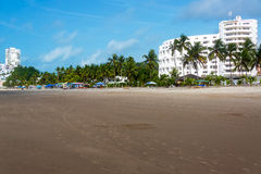 Beach and Palm Trees Stock Photography