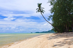 Beach  with palm trees on Samui island Royalty Free Stock Images