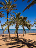 Beach with Palm Trees in Spain. Deserted palm-fringed beach on the Mar Menor, with the La Manga strip on the horizon. Los Nietos, Costa Calida, Spain Stock Images