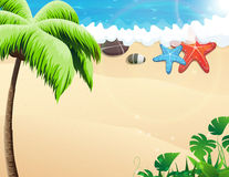 Beach with palm trees and  starfishes Stock Photo