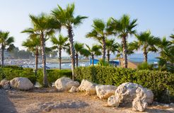 Beach and palm trees, sunny day in the resort of Paphos, Cyprus. Beach and palm trees, sunny day in the resort of Paphos Royalty Free Stock Photo
