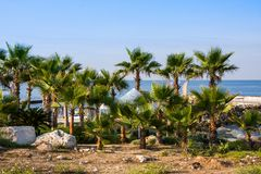 Beach and palm trees, sunny day in the resort of Paphos, Cyprus. Beach and palm trees, sunny day in the resort of Paphos Stock Photography