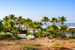 Beach and palm trees, sunny day in the resort of Paphos, Cyprus. Beach and palm trees, sunny day in the resort of Paphos Royalty Free Stock Image