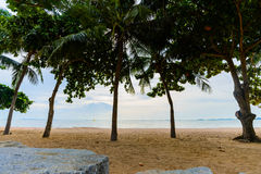 Beach with palm trees Royalty Free Stock Image
