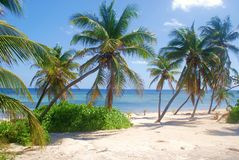 Beach and Palm Trees. Tropical Beach and Palm Trees Little Cayman Stock Photography