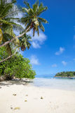 Beach with palm trees. Tropical beach with palm trees, tropic plants, white sand, granite rocks, a turquoise sea and a blue sky with white clouds, Seychelles, La Stock Photo