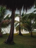 Beach with palm trees and white sand. Philippines Stock Image