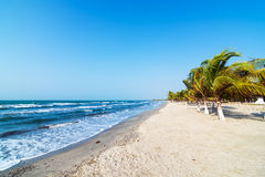 Beach and Palm Trees. White sand beach and palm trees on the Colombian Caribbean coast in Covenas Stock Photography