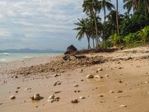 Beach with palm trees and white sand. Philippines Royalty Free Stock Image