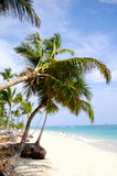 Beach with palm and white sand Stock Photo